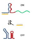 RNA circuits